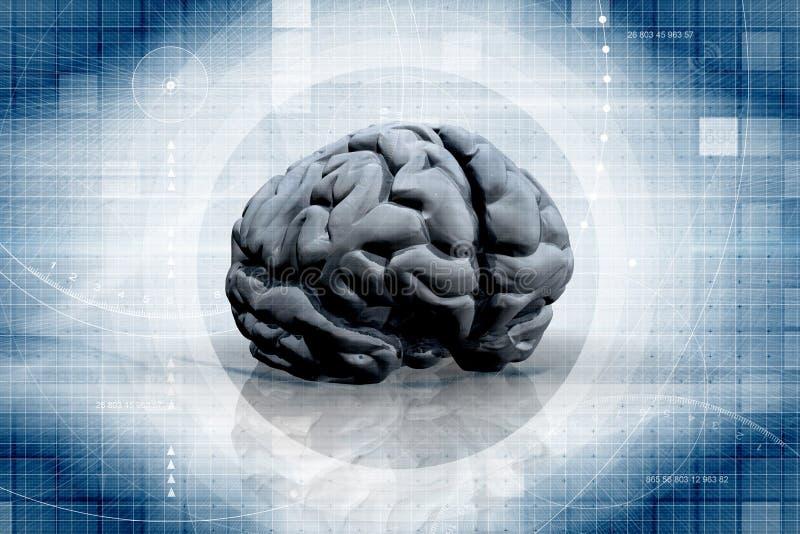 Il cervello illustrazione vettoriale