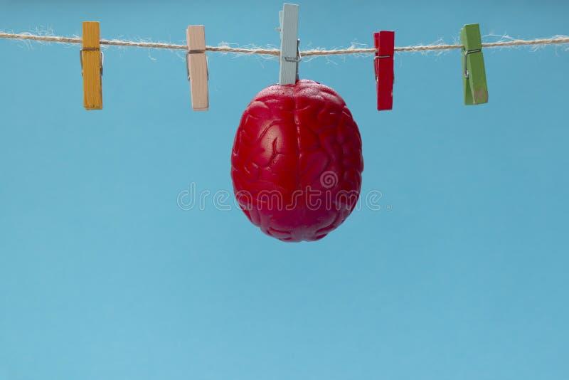 Il cervello di colore rosso è asciugato su una corda da bucato, su una molletta da bucato Cervello asciutto immagine stock libera da diritti