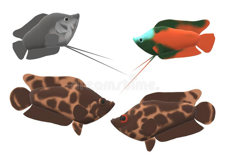 Il cespuglio nano del leopardo e di gorami nero pesca nell'illustrazione 3D fotografie stock libere da diritti