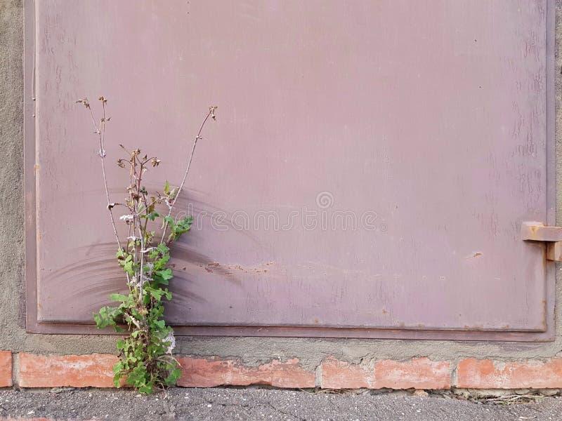 Il cespuglio si sviluppa sotto la porta del metallo fotografia stock libera da diritti