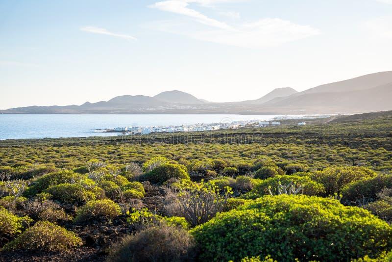 Il cespuglio verde e l'oceano atlantico, Lanzarote, Isole Canarie immagini stock