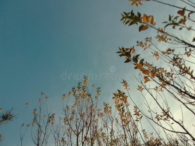 Il chiaro cielo dopo il sole è aumentato nella mattina fotografia stock