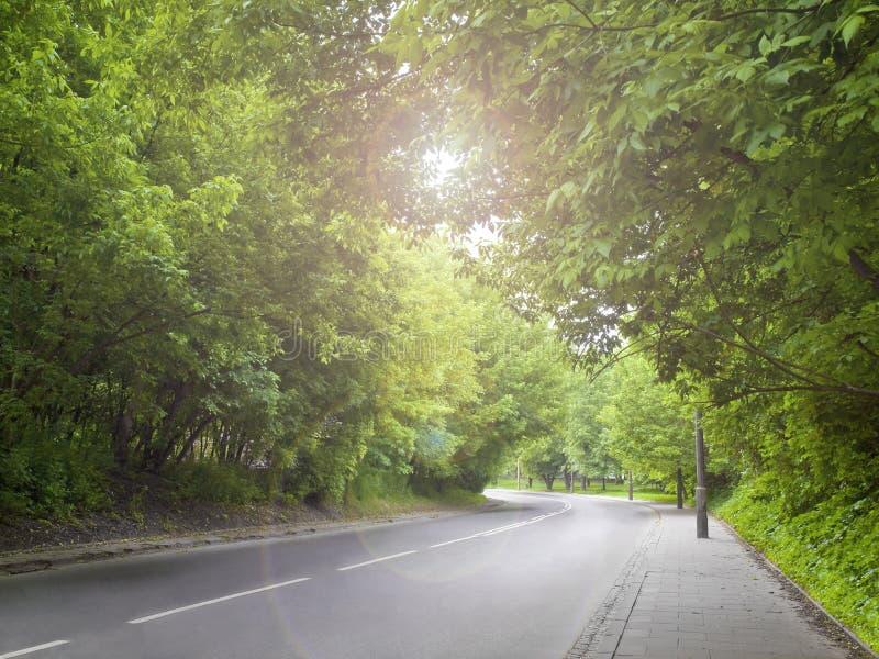 Il chiarore solare. immagini stock libere da diritti