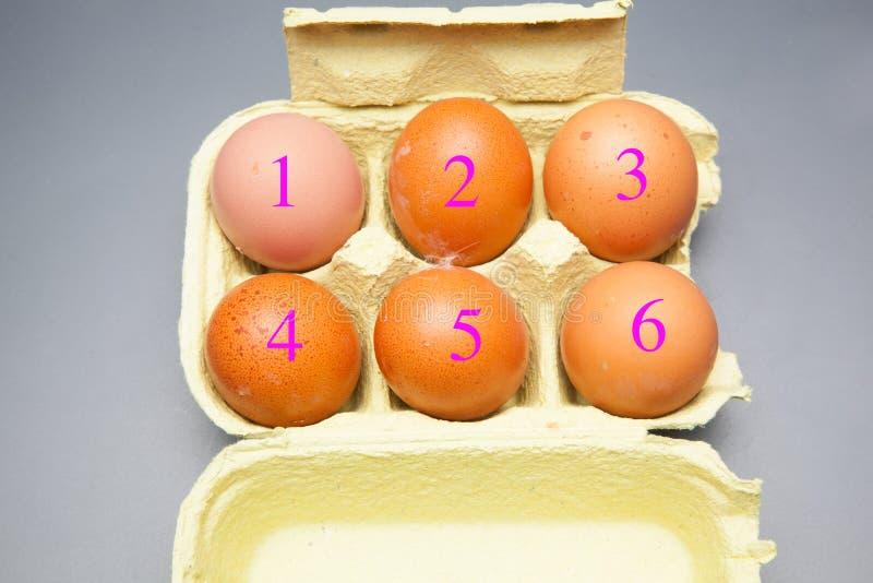Il chickHalf fresco un dozzina polli freschi eggsen le uova fotografia stock libera da diritti