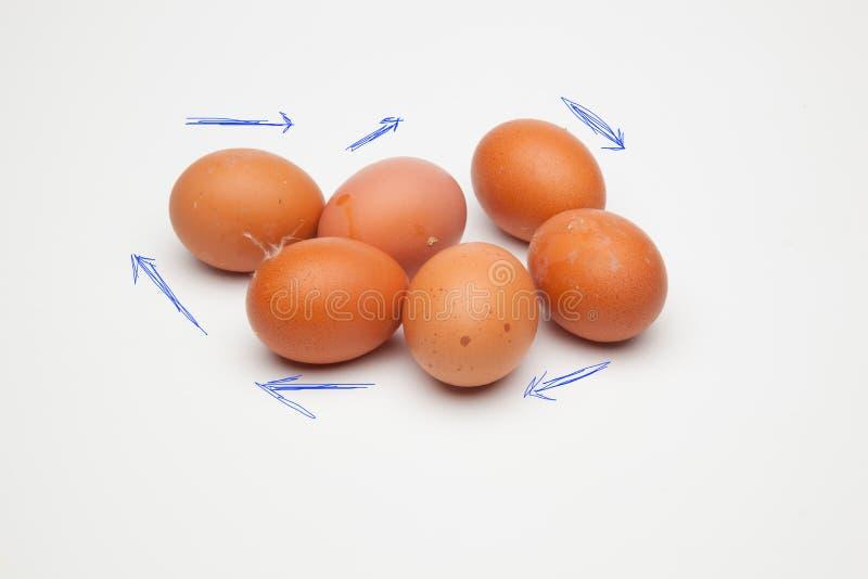 Il chickHalf fresco un dozzina polli freschi eggsen le uova immagine stock libera da diritti
