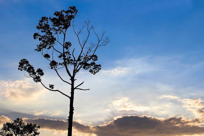 Il cielo immagini stock libere da diritti