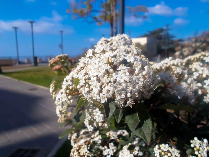 Il cielo bianco della macro di macro del macroshot natura del fiore si appanna le foglie bluesky fotografia stock