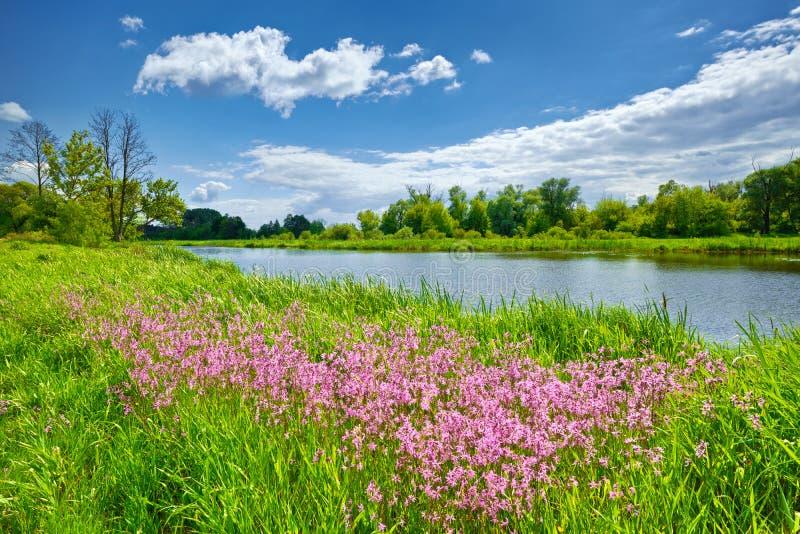 Il cielo blu del paesaggio del fiume dei fiori della primavera si appanna la campagna fotografia stock