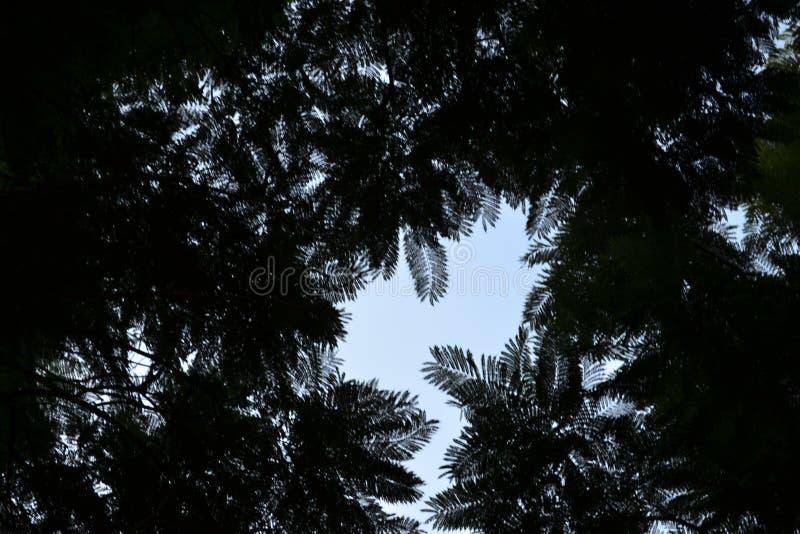 Il cielo che si nasconde dietro le armi degli alberi fotografia stock libera da diritti