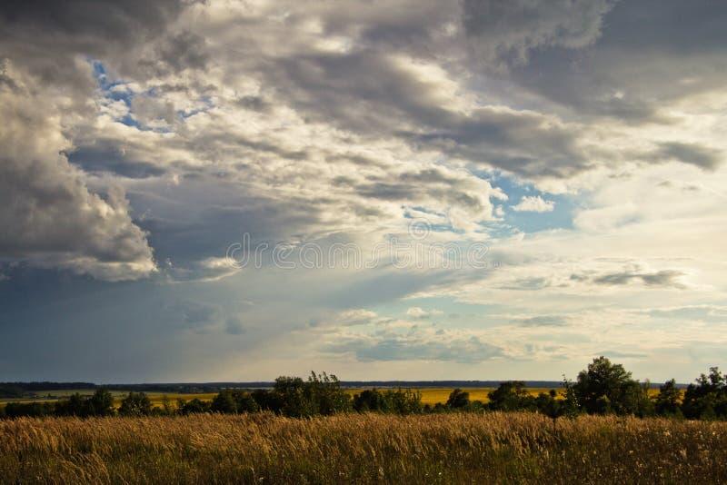 Il cielo prima di un temporale sopra il campo giallo in Russia fotografia stock