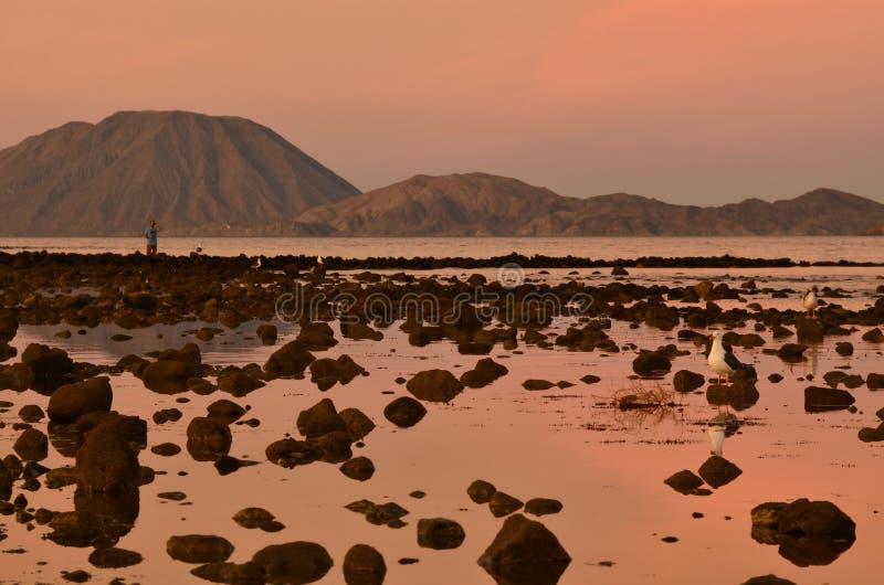 Il cielo rosa dell'alba ha riflesso nella riva rocciosa dell'acqua, uomo isolato che per mezzo del binocolo, la bassa marea Bahia immagine stock