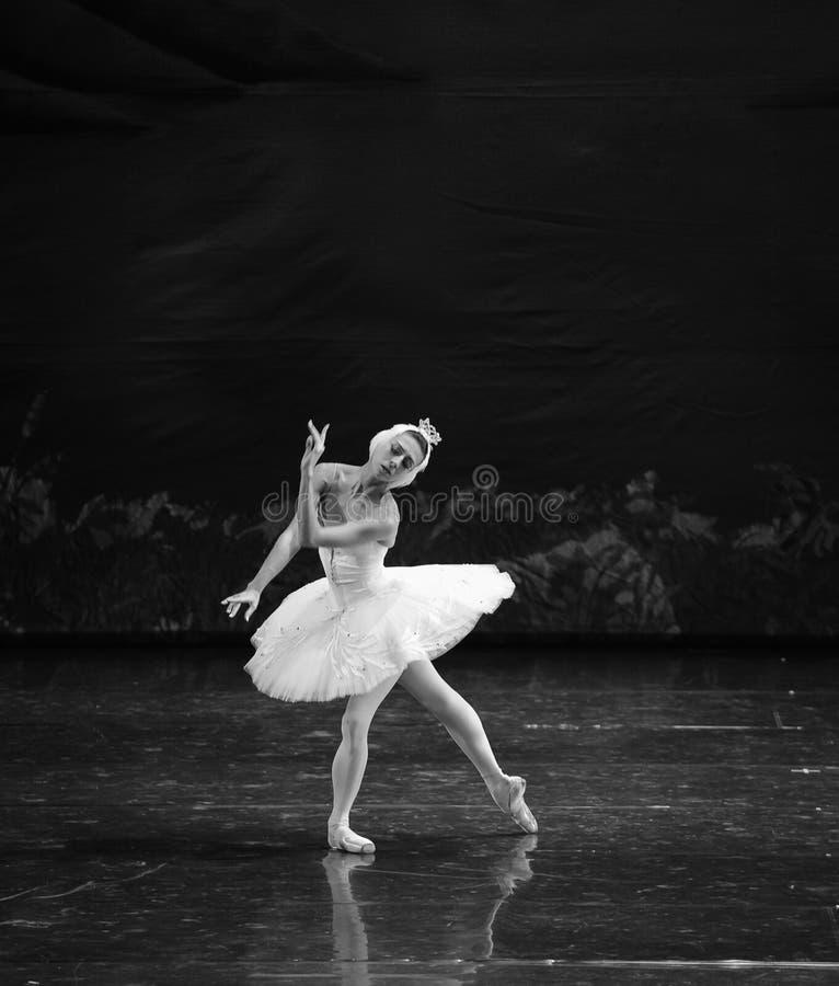 Il cigno bianco nel lago swan di acqua balletto immagine stock libera da diritti