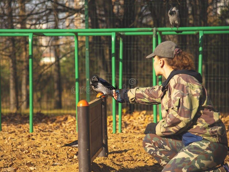 Il cinologo al Cane Playground addestra un corvo fotografia stock