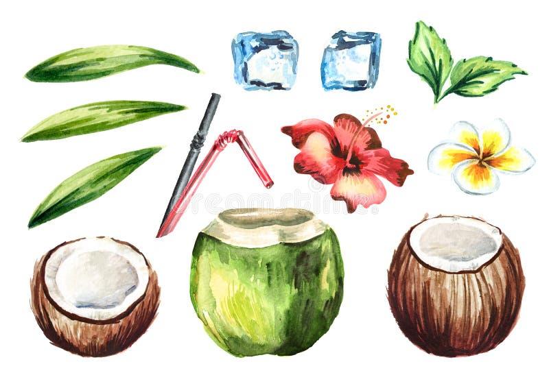 Il cocktail fresco tropicale della noce di cocco ha messo con le paglie, la menta, la plumeria, ibisco fiorisce, cubetti di ghiac royalty illustrazione gratis