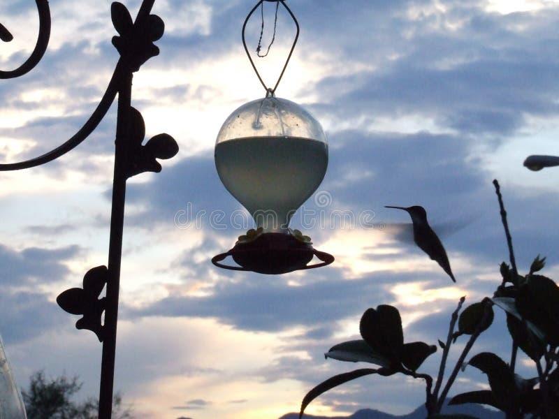Il colibrì immagini stock