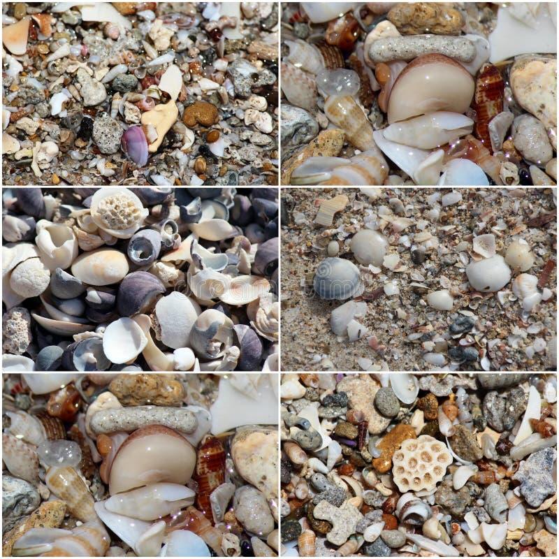 Il collage delle coperture ha lavato su sulla riva sabbiosa alla spiaggia di Hutt vicino all'Australia occidentale di Bunbury su  immagine stock