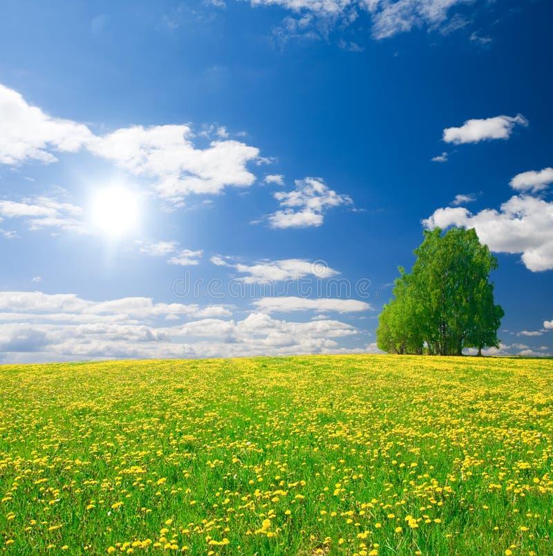 Il colore giallo fiorisce la collina sotto il cielo nuvoloso blu immagine stock libera da diritti