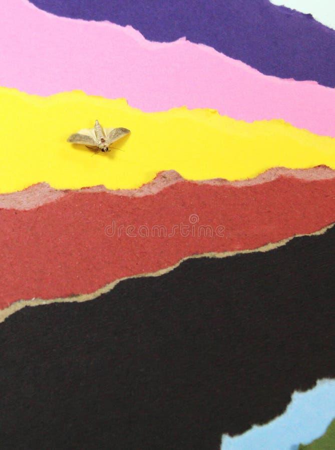 Il colore incarta il fondo con l'insetto immagine stock libera da diritti