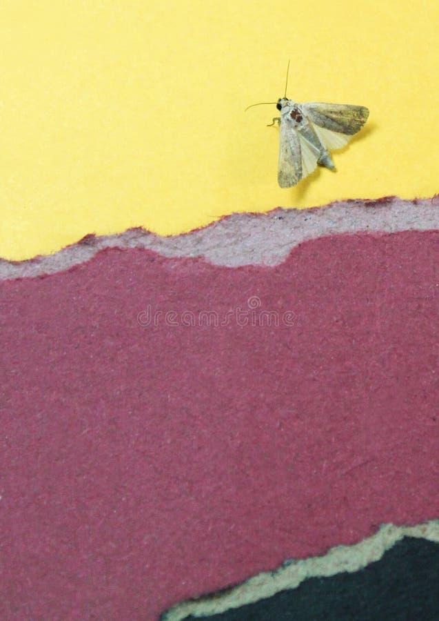Il colore incarta il fondo con l'insetto fotografia stock