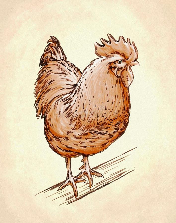 Il colore incide l'illustrazione isolata del pollo illustrazione di stock