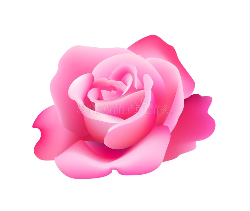 Il colore rosa è aumentato illustrazione vettoriale