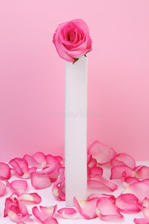 Il colore rosa è aumentato in un vaso fotografia stock libera da diritti