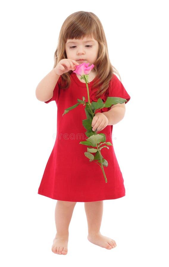 Il colore rosa commovente del piccolo bambino è aumentato fotografia stock