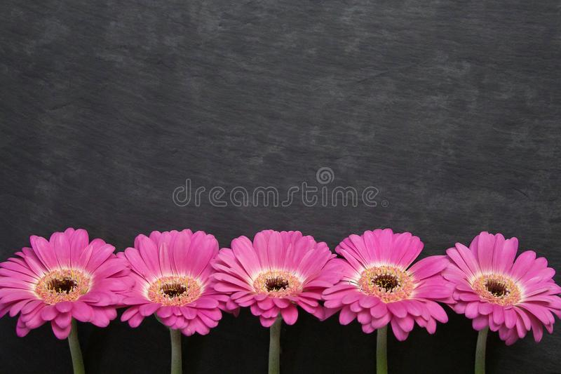 Il colore rosa fiorisce la priorità bassa _1 fotografia stock