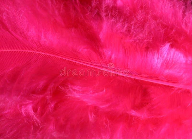 Il colore rosa mette le piume alla priorità bassa _1 fotografie stock libere da diritti