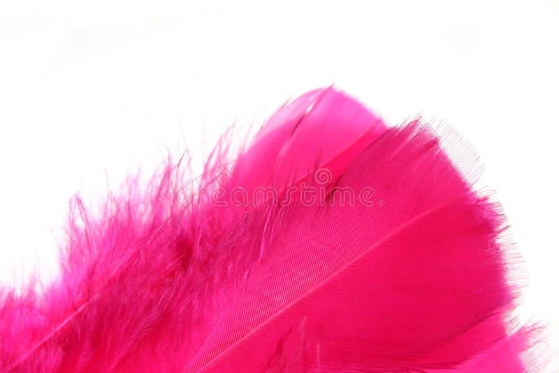 Il colore rosa mette le piume alla priorità bassa _4 fotografia stock libera da diritti