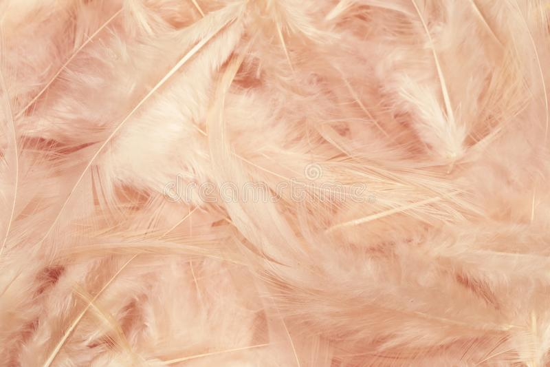 Il colore rosa mette le piume alla priorit? bassa _3 fotografie stock