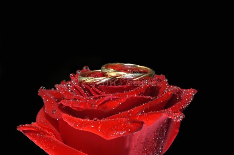 Il colore rosso è aumentato con gli anelli immagine stock