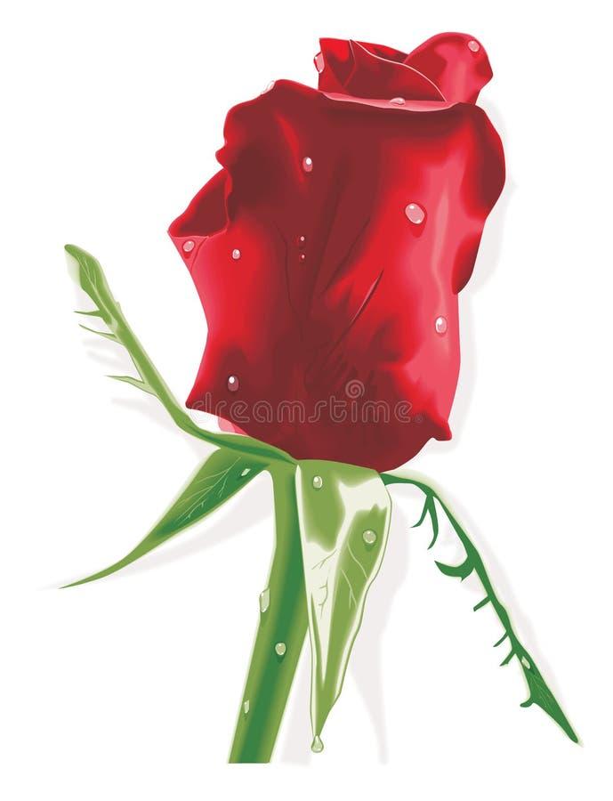 Il colore rosso è aumentato con le gocce di pioggia illustrazione di stock