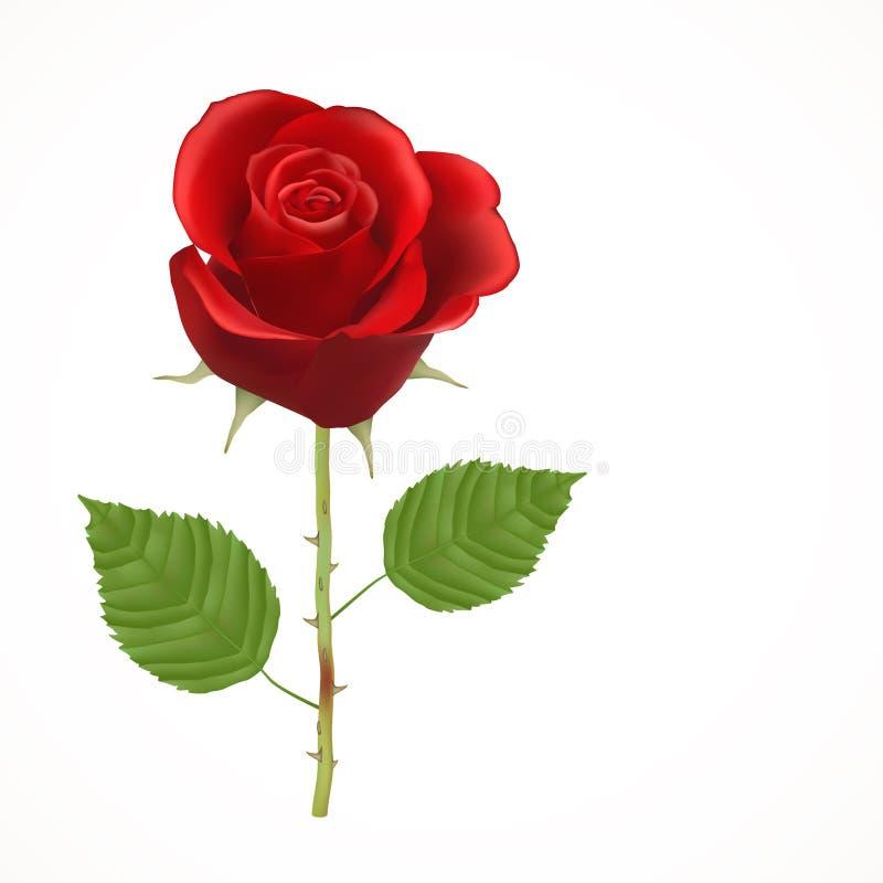 Il colore rosso di fioritura è aumentato royalty illustrazione gratis