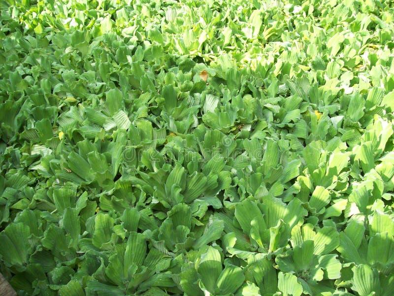 Il colore verde delle piante lenisce fotografie stock libere da diritti