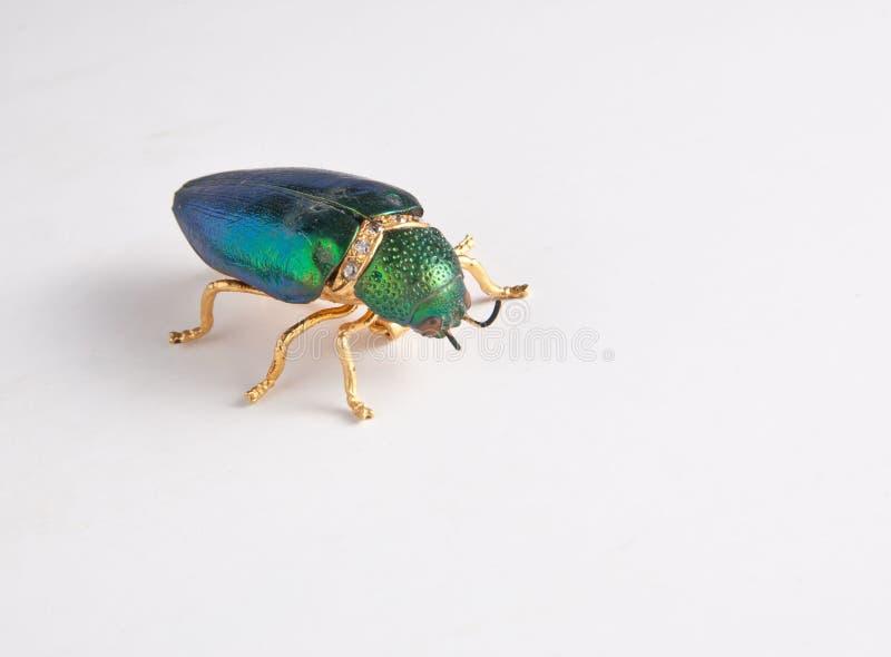 Il colore vermiglio dell'insetto traversa duro fotografie stock libere da diritti