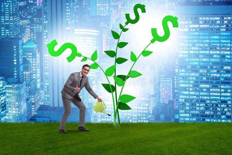 Il concetto dell'albero dei soldi con acqua dell'uomo d'affari fotografia stock