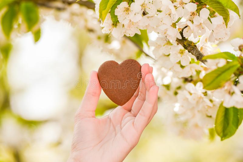 Il concetto di amore per la natura Fioritura di estate Prenda la cura della natura immagine stock libera da diritti