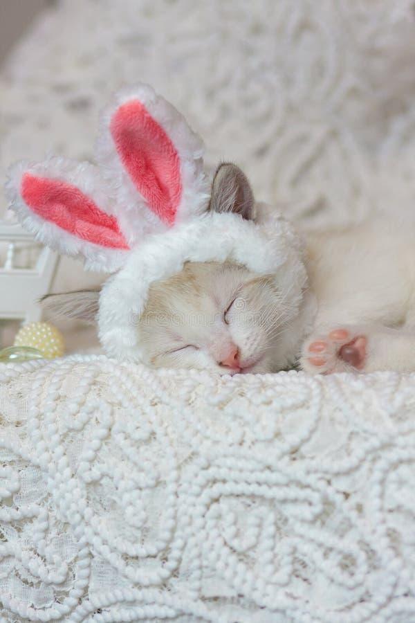 Il concetto di comodit? domestica Sonno dolce del gattino immagine stock