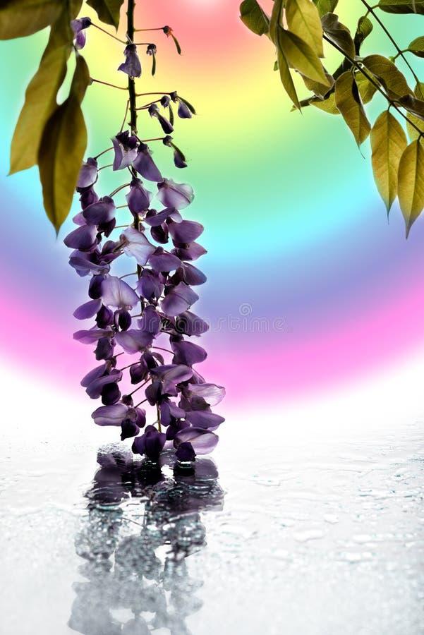 Il concetto di macrobellezza fiori LXXII fotografie stock libere da diritti