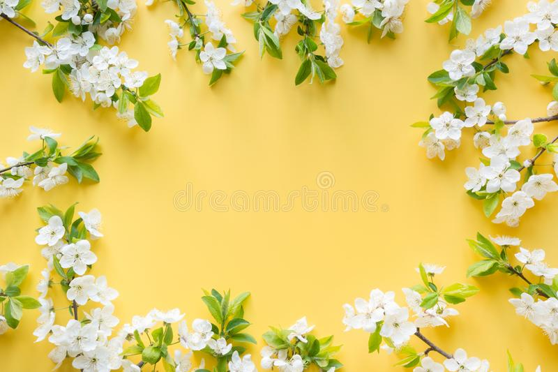Il confine dei frutti bianchi della molla sboccia rami su giallo Reticolo floreale Insegna o modello Vista da sopra, disposizione fotografia stock