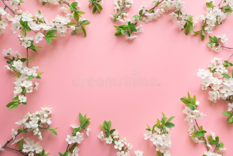 Il confine dei frutti bianchi della molla sboccia rami sul rosa Reticolo floreale Vista da sopra, disposizione piana fotografia stock