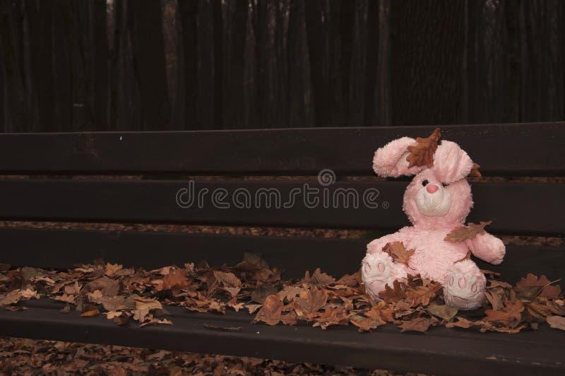 Il coniglietto-coniglio abbandonato dimenticato solo del giocattolo dell'orsacchiotto si è seduto su un banco di legno in foresta fotografia stock libera da diritti