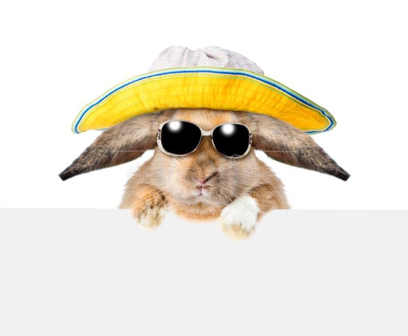 Il coniglietto in occhiali da sole ed il Panama che dà una occhiata da dietro svuotano il bordo Isolato su priorità bassa bianca immagini stock