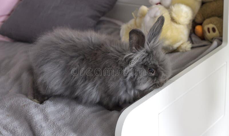 Il coniglio grigio lanuginoso fotografia stock