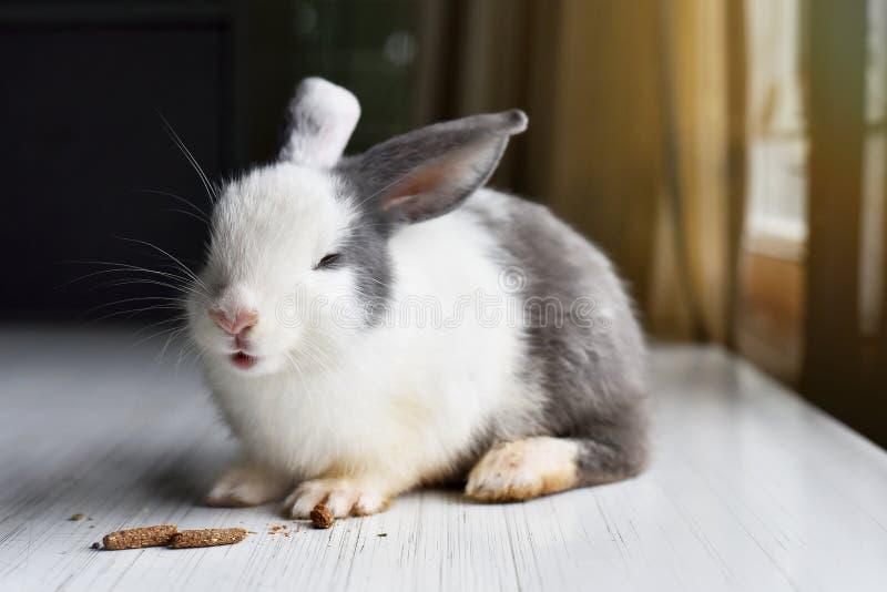 Il coniglio sveglio gode di di mangiare gli spuntini favoriti, felici fotografia stock libera da diritti
