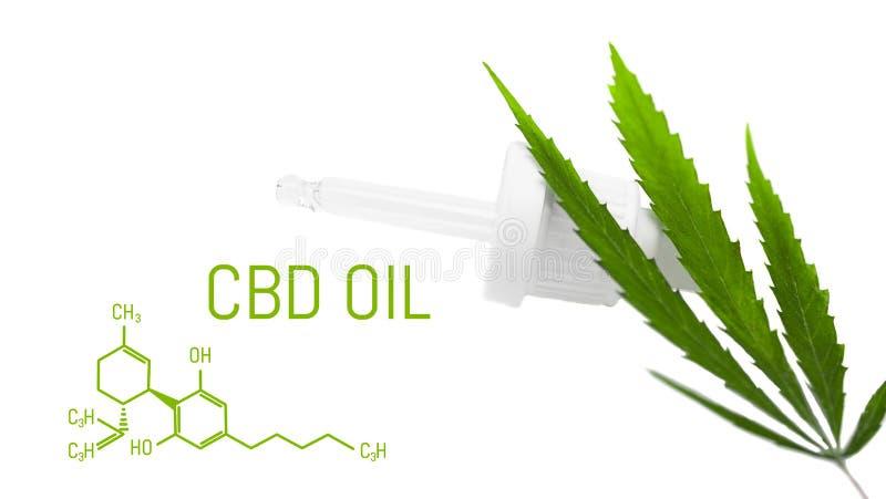 Il contagoccia con la cannabis dell'olio di CBD ha isolato foglia verde della canapa Concetto medico della marijuana immagine stock
