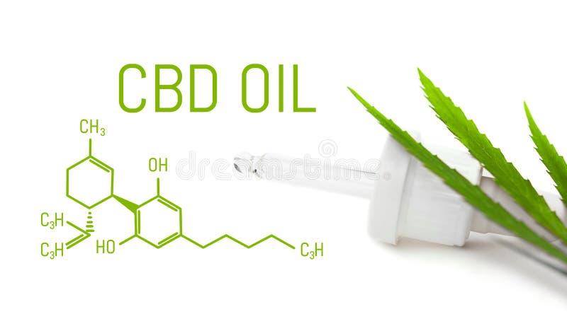 Il contagoccia con la cannabis dell'olio di CBD ha isolato foglia verde della canapa Concetto medico della marijuana fotografie stock