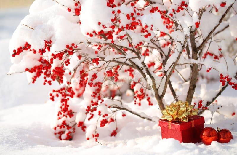 Il contenitore di regalo e le palle di Natale sotto Holly Berries cespuglio hanno coperto i wi fotografia stock libera da diritti