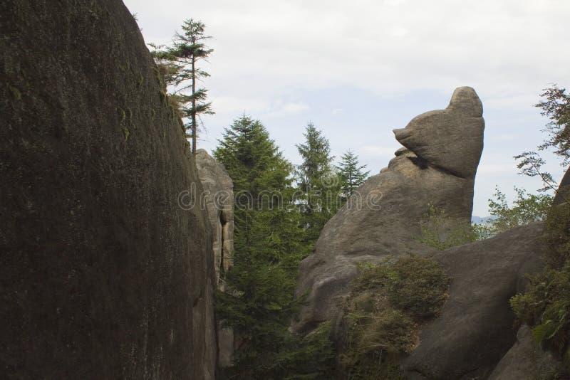 Il contrasto delle pietre e degli alberi fotografia stock